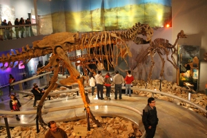 dinosaur skeletons at the Desert Museum, Saltillo, Coahuila, Mexico